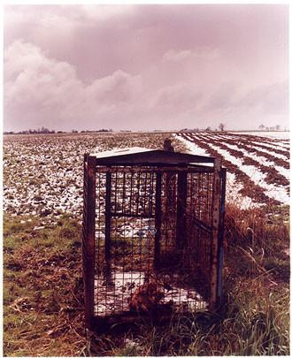 0°00' longitude, 52°39N' latitude, Fox Trap, Colesbridge Farm, Cambridgeshire, 2001