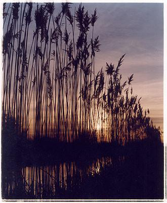 Reeds - Wicken Lode, Wicken 2002