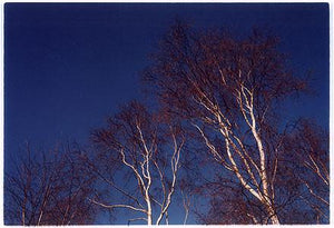 Silver Birches, Wicken Fen 2002