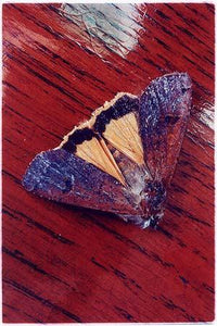 Moth, Post War Prefab, Wisbech 1993