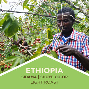 Ethiopia | Sidama | Shoye Co-op - Light Roast