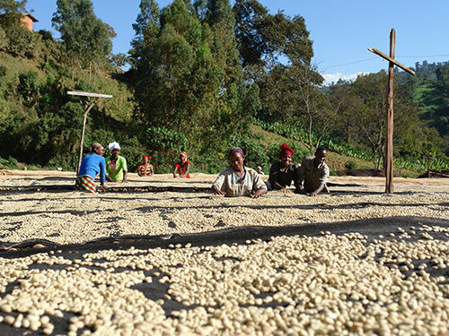 Ethiopia Guji | Suke Quto | Fully Washed | Light Roast