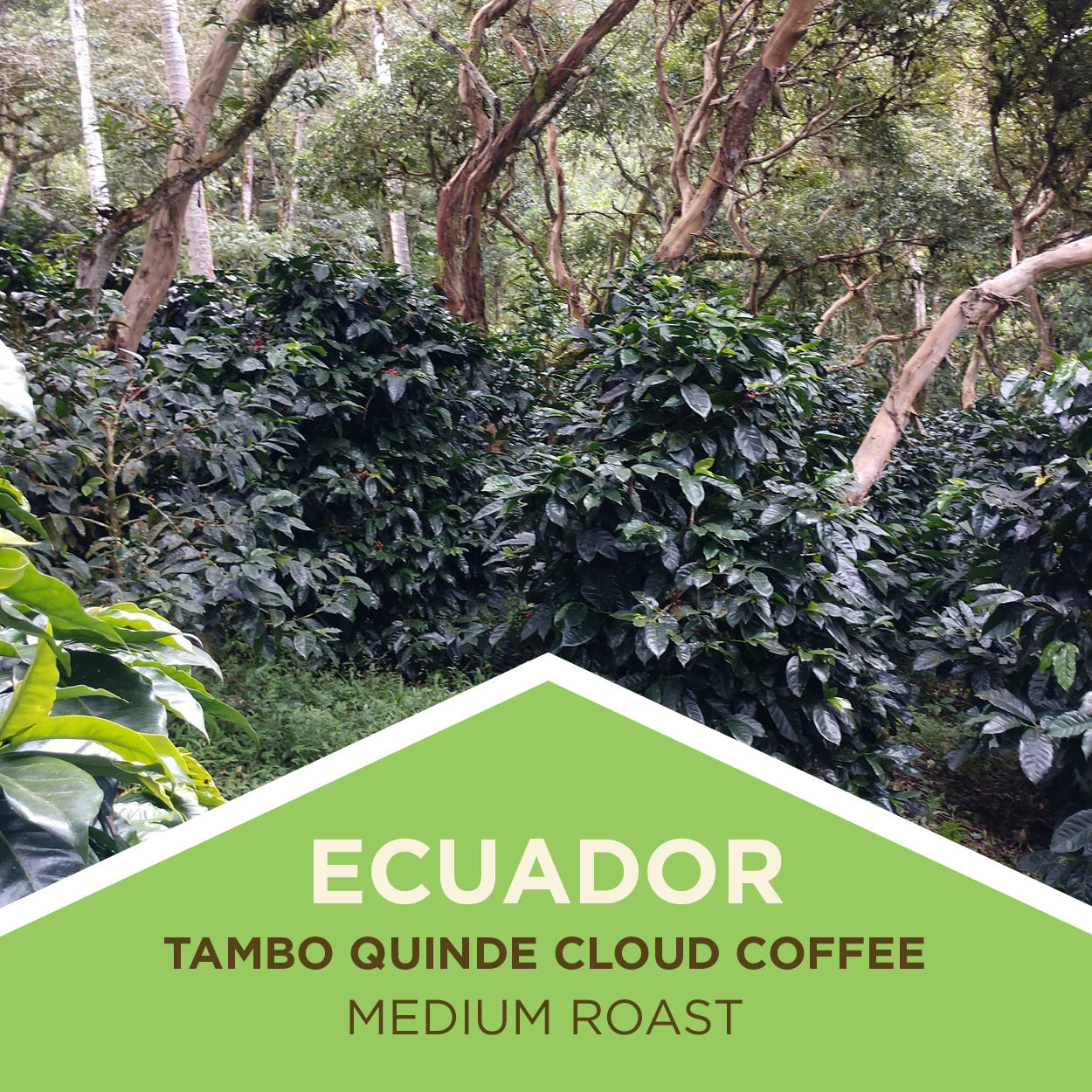Ecuador | Cloud Coffees