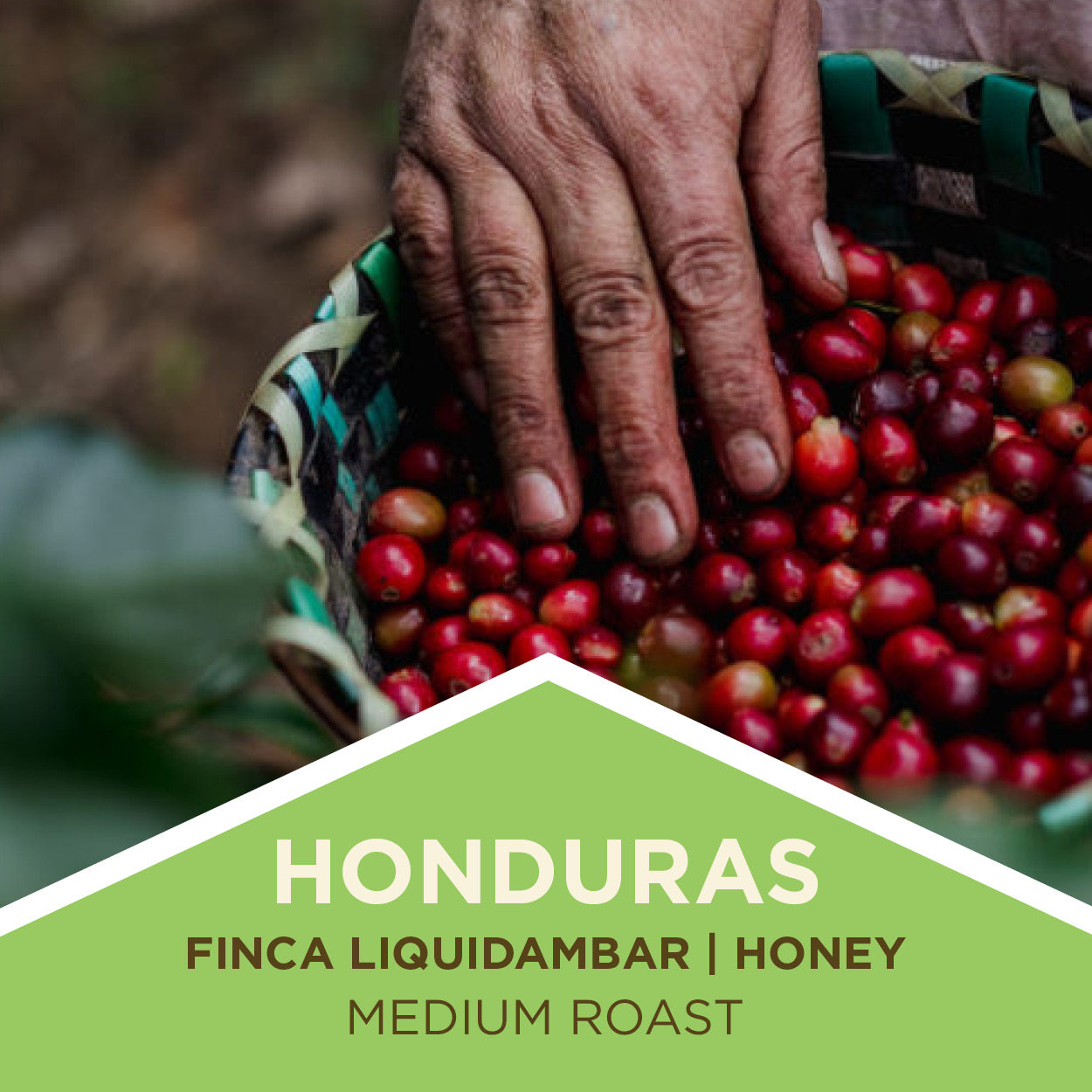 Honduras | Finca Liquidambar | Honey Process | Medium Roast