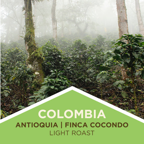 Colombia | Antioquia/Finca Cocondo - Light Roast