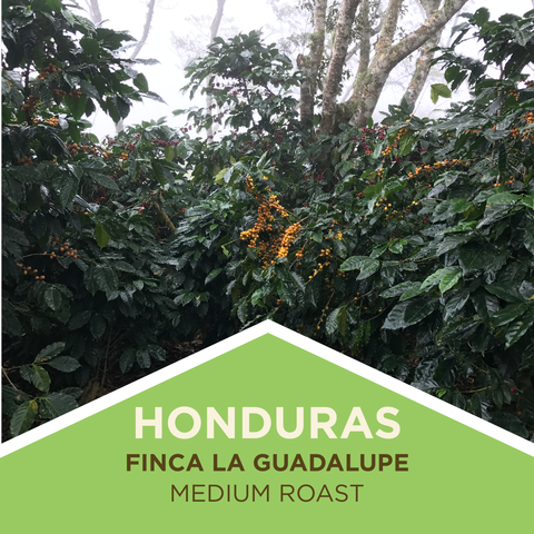 Honduras | Finca La Guadalupe | Honey Process - Medium Roast