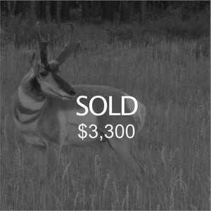 Lot #16: 2020 Plateau, Parker Mtn; Buck Pronghorn: Any Legal Weapon