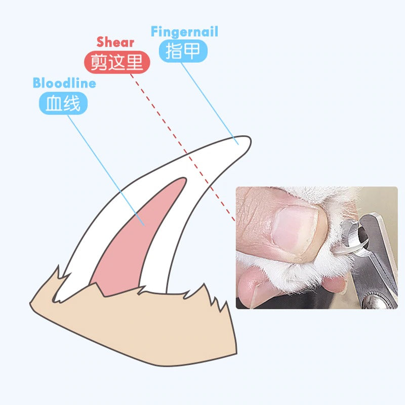 Safely Stainless Steel Pet Nail Clipper Cutter