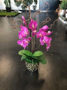 Pink Orchid with Studded Base