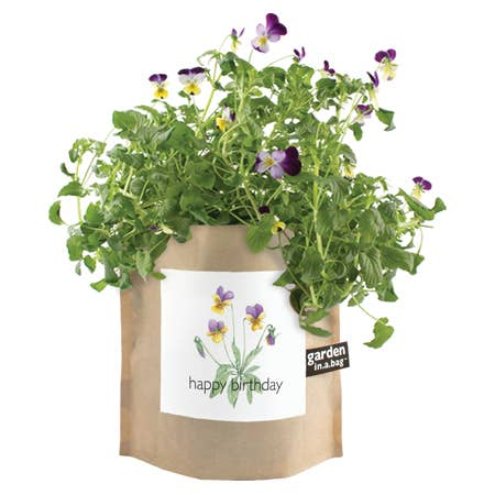 Potting Shed Creations, Ltd. - Garden in a Bag | Happy Birthday