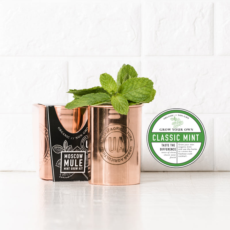 Classic Mint Moscow Mule Grow Kit