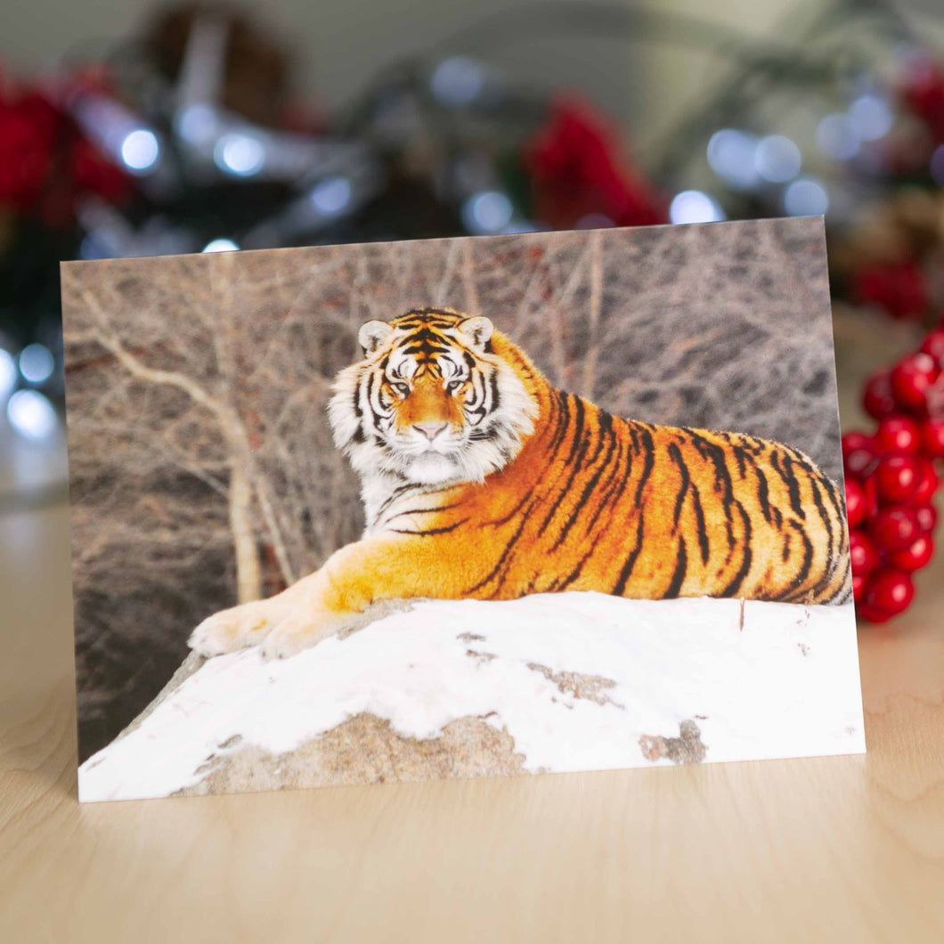 Tiger in the snow Christmas cards