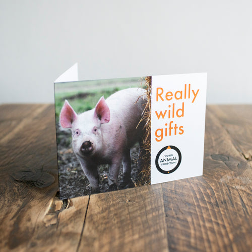 Help provide a happier life for a pig