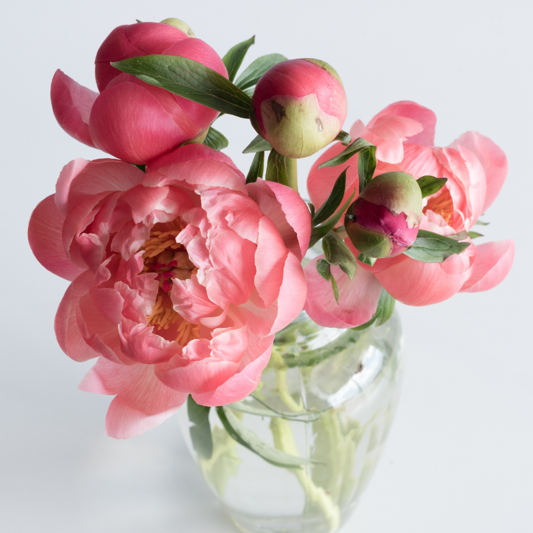 Peonies are a great present and a fabulous way to enjoy flowers at home.   They are great 'as is' (5 stems per bunch) or add some foliage filler.   Peonies bring a little poetry, glamour, classic beauty, whatever you call it...gorgeousness perhaps, into your world.  Get them while you can!
