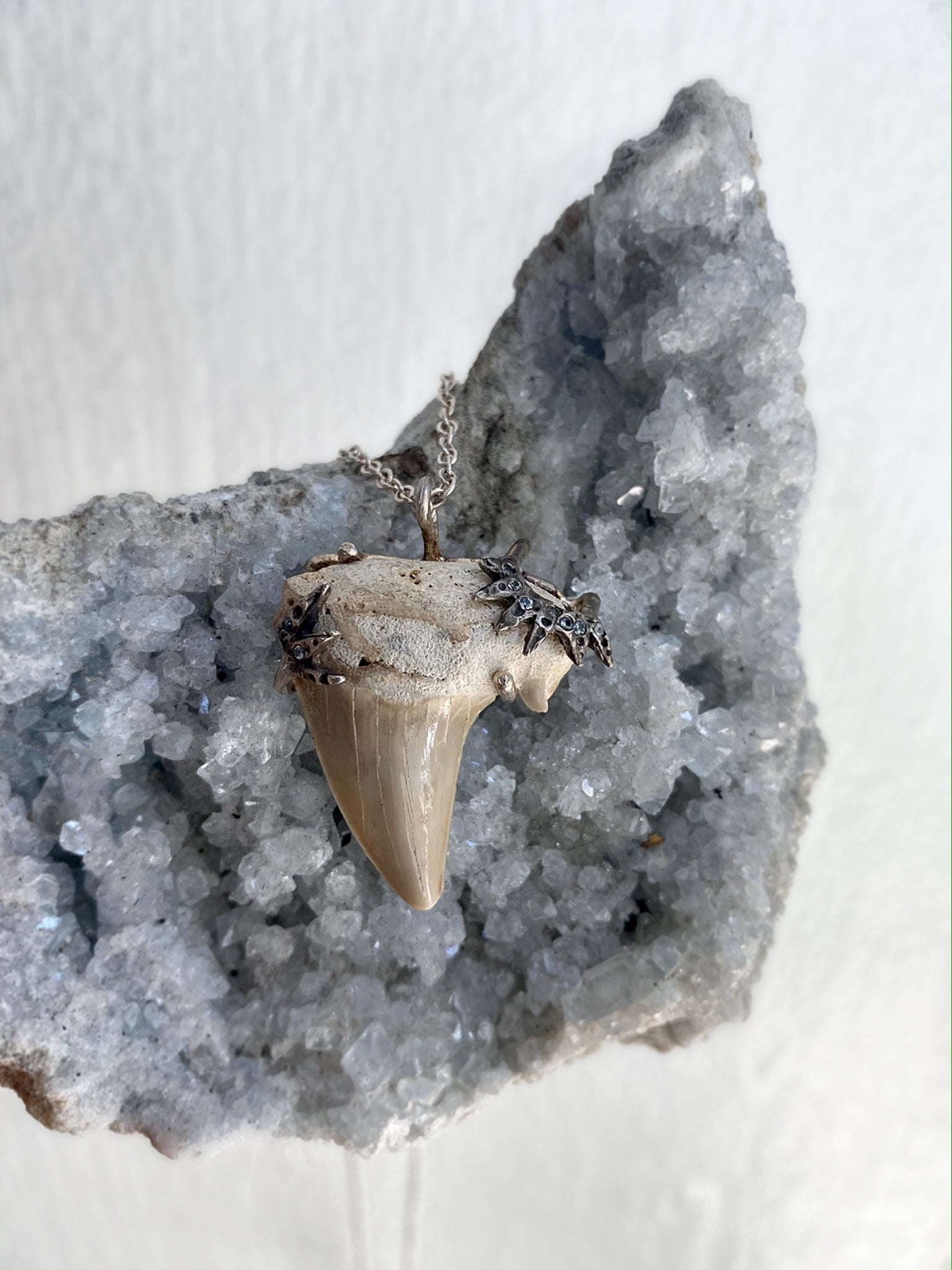 One of A Kind Shark Tooth Amulet