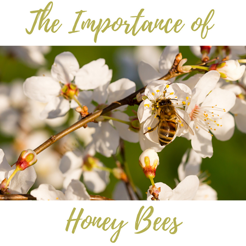 Sally B's Skin Yummies: The Importance of Honeybees