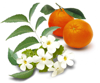 Orange Flower Facial Freshener - Brooklan Tree