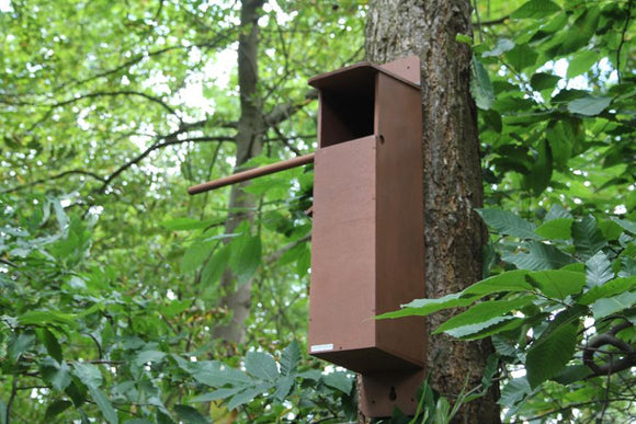 Tawny Owl Box With Wireless Camera System