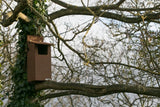 Little Owl Box With Wireless Camera System