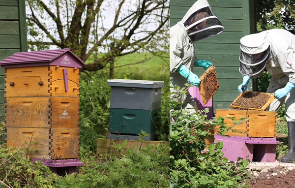 Borrago bees update beekeeping for honey in mocktails and non-alcoholic cocktails