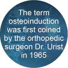 Osteoinduction coined by Dr Urist in 1965
