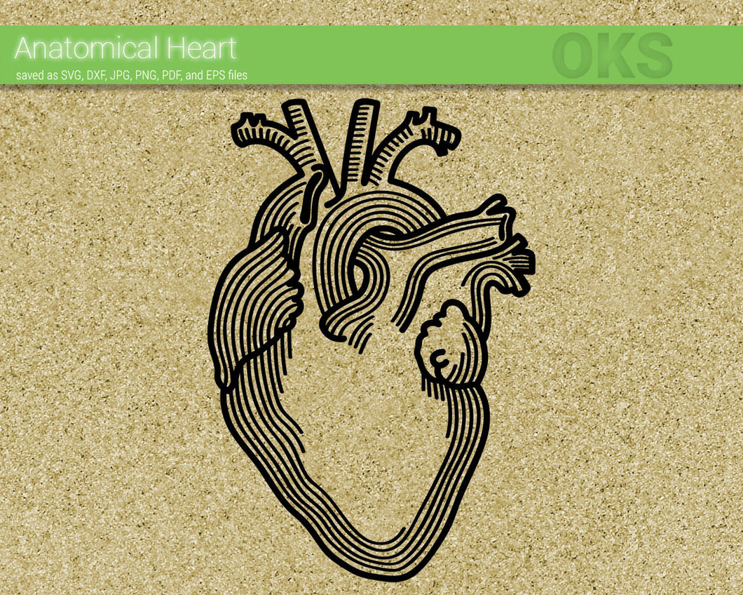 anatomical heart SVG cut files, DXF, vector EPS cutting file instant download for cricut and other uses