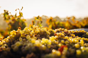 Chardonnay – Diverse and Exciting