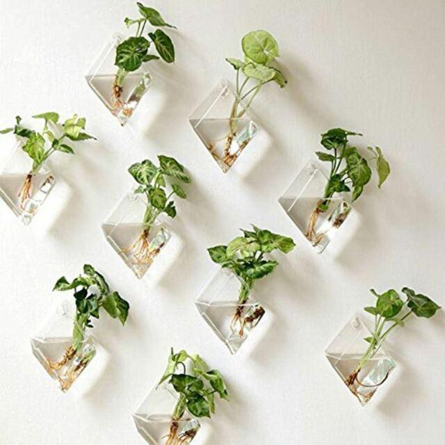 Diamond Wall Mounted Terrariums