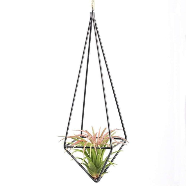 Hanging Air Plants Rustic Stands Pots & Planters