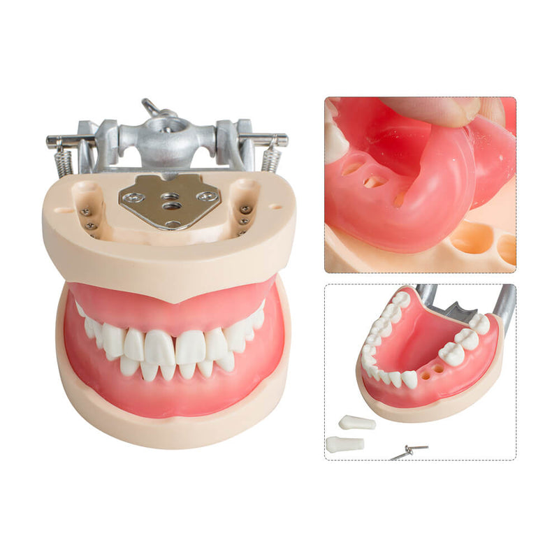 Model Dental Universal Plate 200H Type Removable Teeth