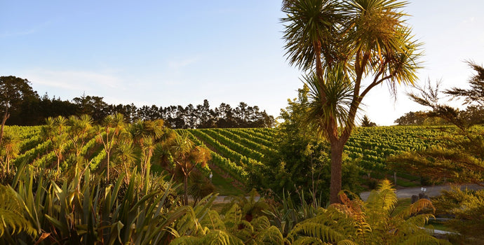 The Kumeu region was the original commercial wine producing area of New Zealand. Book your wine tasting tour with Coast to Coast Tours today!