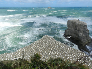 Coast to Coast Tours is an Auckland Regional Council Approved Operator which is legally approved to take tourists to specified parks including Muriwai Beach