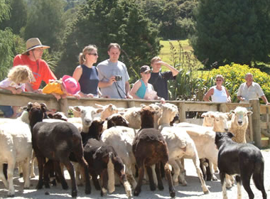 Auckland Sheep World Tour