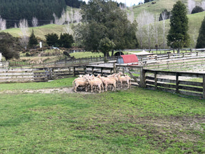 Sheep Tour-Half Day