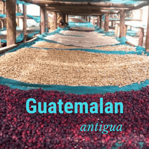 Guatemalan Antigua - Fresh Roasted