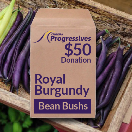 'ROYAL BURGUNDY BEANS' SEED DONATION