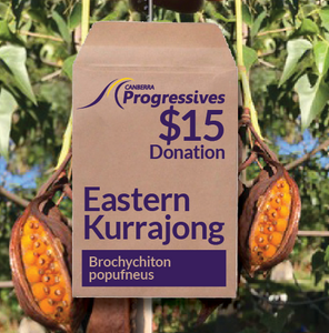 'EASTERN KURRAJONG' SEEDS