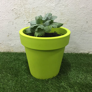 Small Cabbage Plant with Pot (Lime)