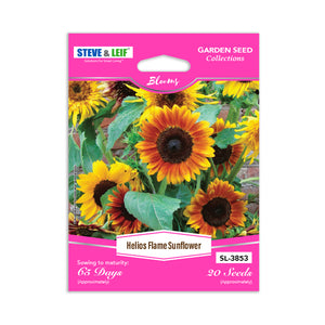 Helios Flame Sunflower Seeds