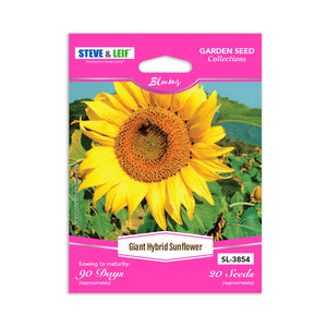 Giant Hybrid Sunflower Seeds