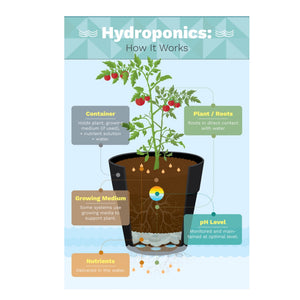 Hydroponics All-In-One Plant Food 2-1-6 (1 Ltr), ,Others - greenleif.sg