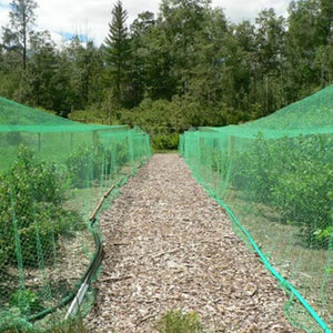 Garden Green Netting (1m x 1m), ,Others - greenleif.sg
