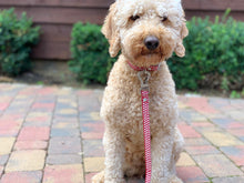 Load image into Gallery viewer, Hugo & Hudson Red Star easy attachable dog lead