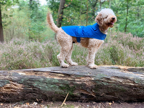Woof & Co Royal Blue Water Resistant Jacket