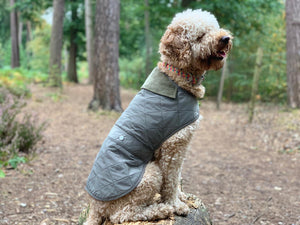 Woof & Co Green Water Resistant Jacket