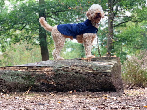 Woof & Co Navy Blue Water Resistant Jacket