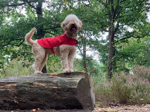 Woof & Co Red Water Resistant Jacket
