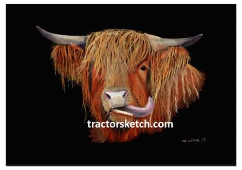 Highland Cow - tractorsketch.com
