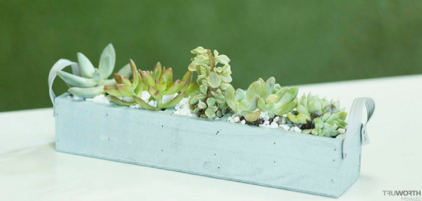 DIY Chalked Planter with Rust-Oleum Chalked Paint