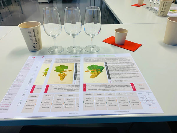 Cours oenologie Terre Oenophile